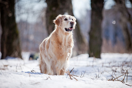 heartworm medication in the winter