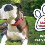 Westland Pet Vaccination Day