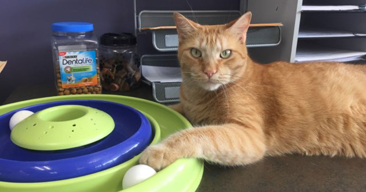 George, our beloved office cat was laid to rest.